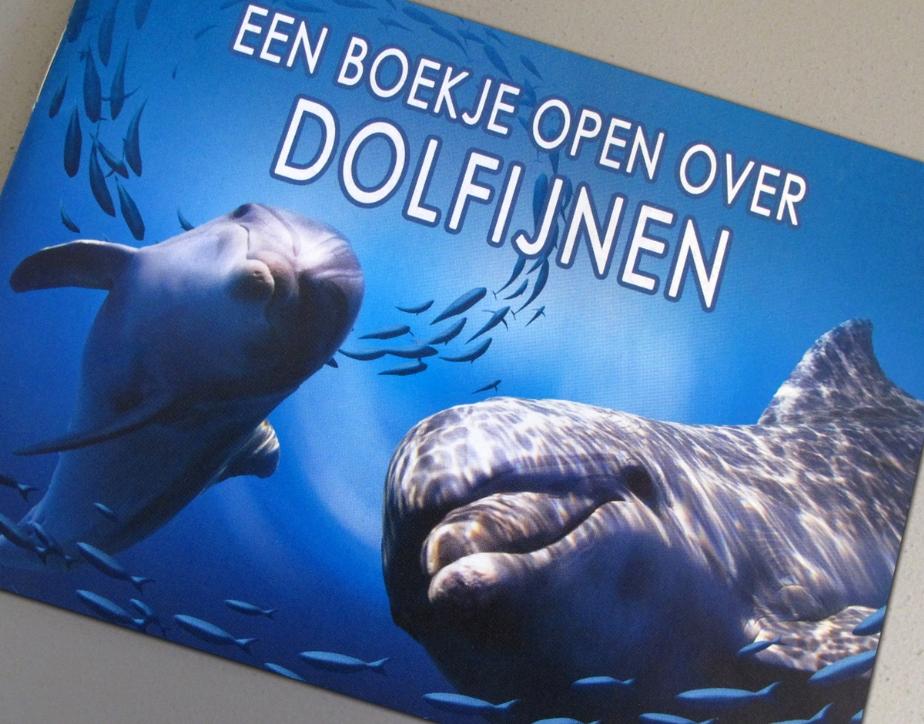 Dolfijnen in zee